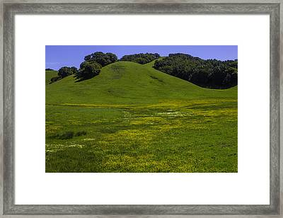 Wildflowers And Green Hills Framed Print