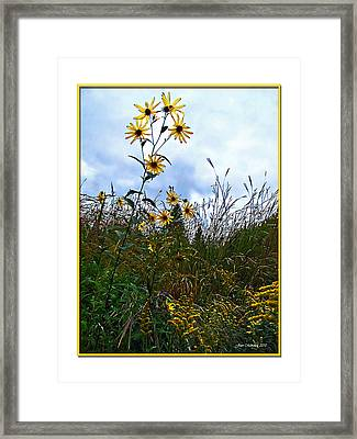 Framed Print featuring the photograph Wildflowers And Mentor Marsh by Joan  Minchak