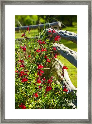 Wildflowers And Rail Fence Framed Print by Thomas R Fletcher