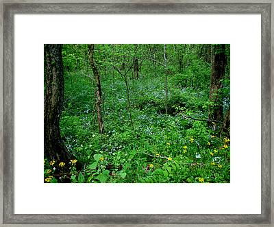 Wildflowers And Woods Framed Print by Martin Morehead