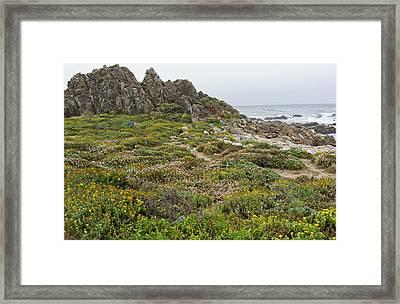 Wildflowers At China Rock - Pebble Beach - California Framed Print by Brendan Reals