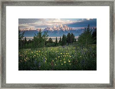 Wildflowers At Grand Teton National Park Framed Print