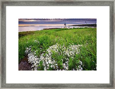 Wildflowers At Marshall Point Framed Print