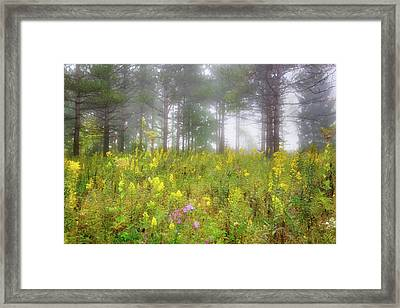 Wildflowers At Retzer Nature Center  Framed Print