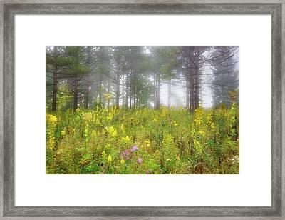 Wildflowers At Retzer Nature Center  Framed Print by Jennifer Rondinelli Reilly - Fine Art Photography