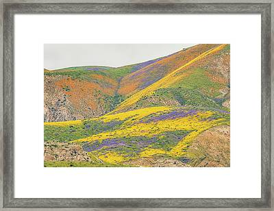 Framed Print featuring the photograph Wildflowers At The Summit by Marc Crumpler