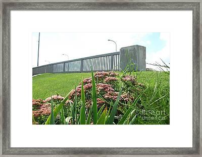 Wildflowers Beside The Bridge Framed Print by Marsha Heiken