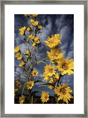 Wildflowers Blooming On The Kansas Framed Print by Jim Richardson