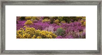 Wildflowers El Prado Nm Framed Print