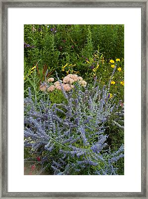 Wildflowers Growing In A Field Framed Print by Todd Gipstein