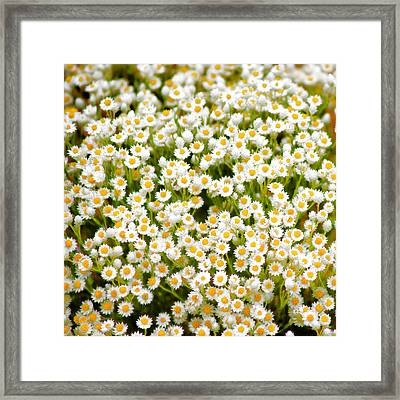 Wildflowers Framed Print by Holly Kempe