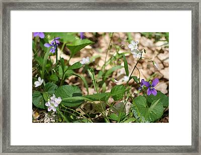 Wildflowers II  Framed Print by Eric Irion