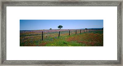 Wildflowers In A Field, Texas, Usa Framed Print
