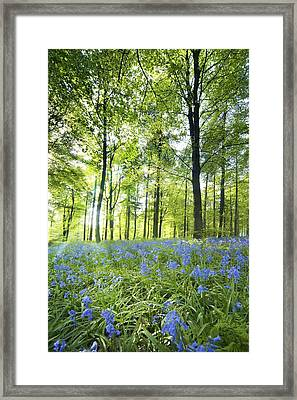 Wildflowers In A Forest Of Trees Framed Print