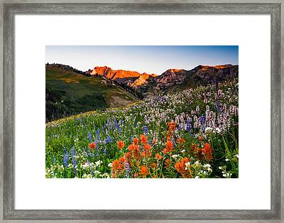 Wildflowers In Albion Basin. Framed Print