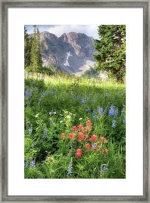 Wildflowers In Albion Basin Utah Framed Print by Utah Images