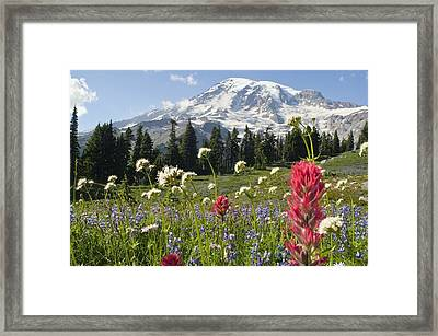Wildflowers In Mount Rainier National Framed Print