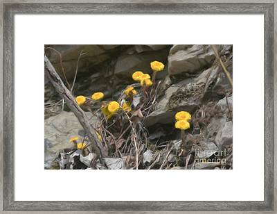 Wildflowers In Rocks Framed Print