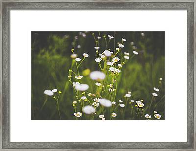 Framed Print featuring the photograph Wildflowers In Summer by Shelby Young
