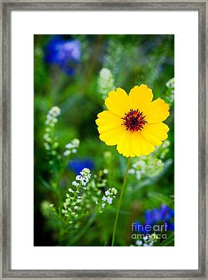Wildflowers In The Hill Country Of Central Texas Framed Print