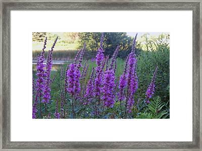 Wildflowers In Wind Framed Print by Molly Dean