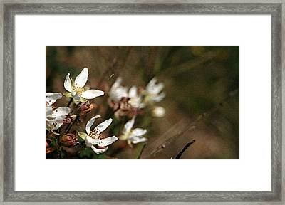 Wildflowers Framed Print by Marna Edwards Flavell