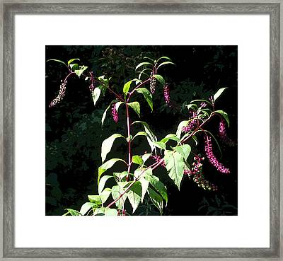 Wildflowers Framed Print by Mindy Newman