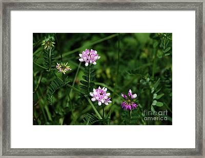 Wildflowers Northford Framed Print