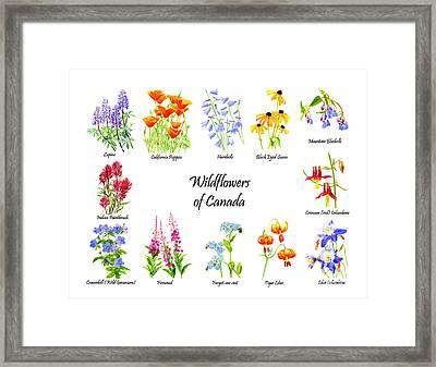 Wildflowers Of Canada Framed Print by Sharon Freeman