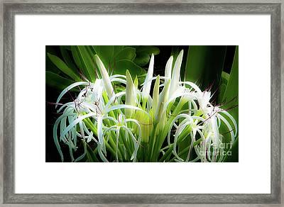 Wildflowers Of Hawaii Framed Print