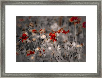 Wildflowers Of The Dunes Framed Print