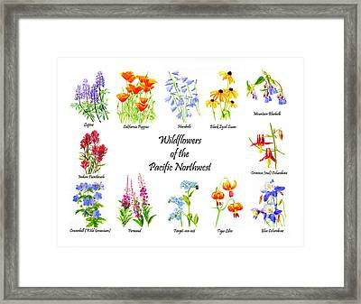 Wildflowers Of The Pacific Northwest Poster Framed Print by Sharon Freeman