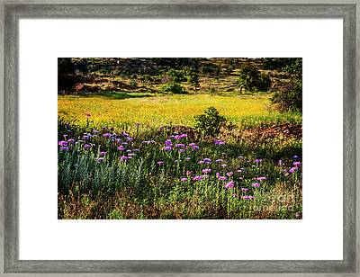 Wildflowers Of The Wichita Mountains Framed Print by Tamyra Ayles