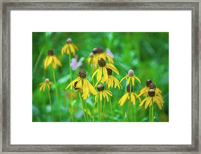 Framed Print featuring the photograph Wildflowers Of Yellow by Bill Pevlor