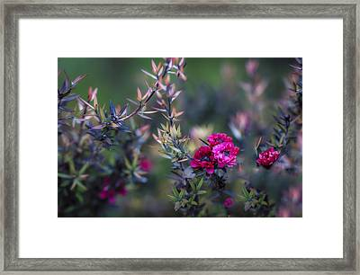 Wildflowers On A Cloudy Day Framed Print