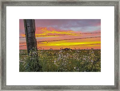 Wildflowers On The Ranch Framed Print
