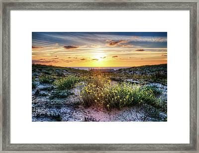 Wildflowers On The Sand Dunes Framed Print