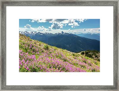 Framed Print featuring the photograph Wildflowers On Whistler Mountain by Pierre Leclerc Photography