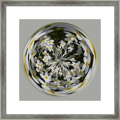 Framed Print featuring the photograph Wildflowers Orb by Bill Barber
