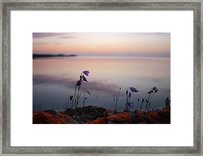 Wildflowers Over Lake Superior Framed Print