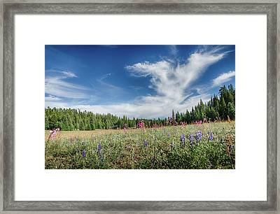 Wildflowers Reach For The Sky Framed Print