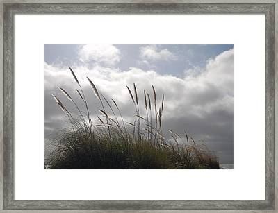 Wildgrass Framed Print by Jean Booth