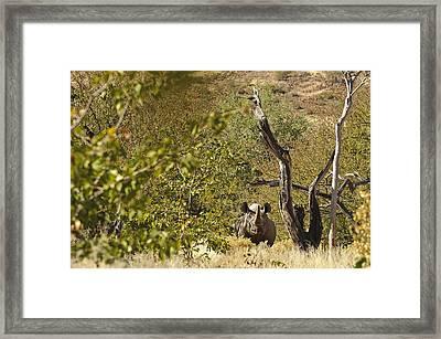 Wildlife - In The Bush Framed Print by Andy-Kim Moeller