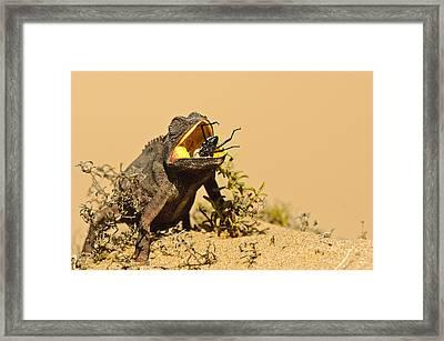 Wildlife - Last Second Framed Print