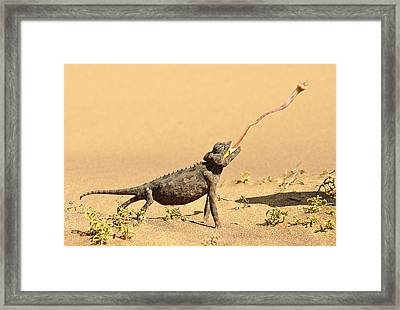 Wildlife - Sniper Framed Print by Andy-Kim Moeller