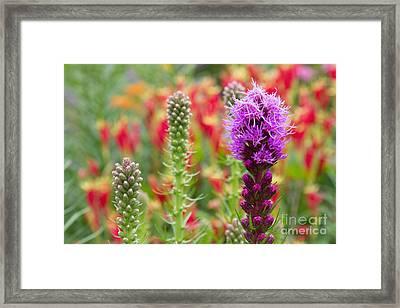 Wildlife Garden Framed Print
