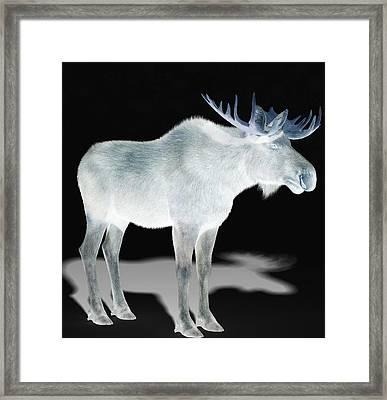Wildlife Moose Framed Print