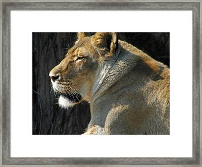 Wildlife Series Framed Print by Ginger Geftakys