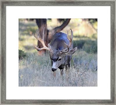Wildlife Wonder Framed Print