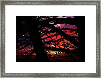 Wildlight Framed Print